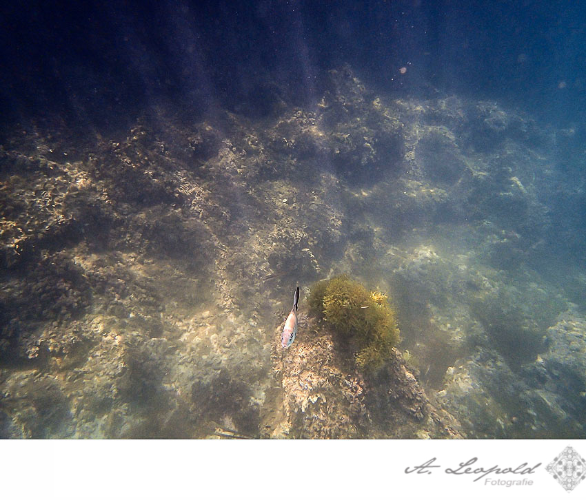 Mallorca Ostern 2014 Copyright by Anne Leopold (83)